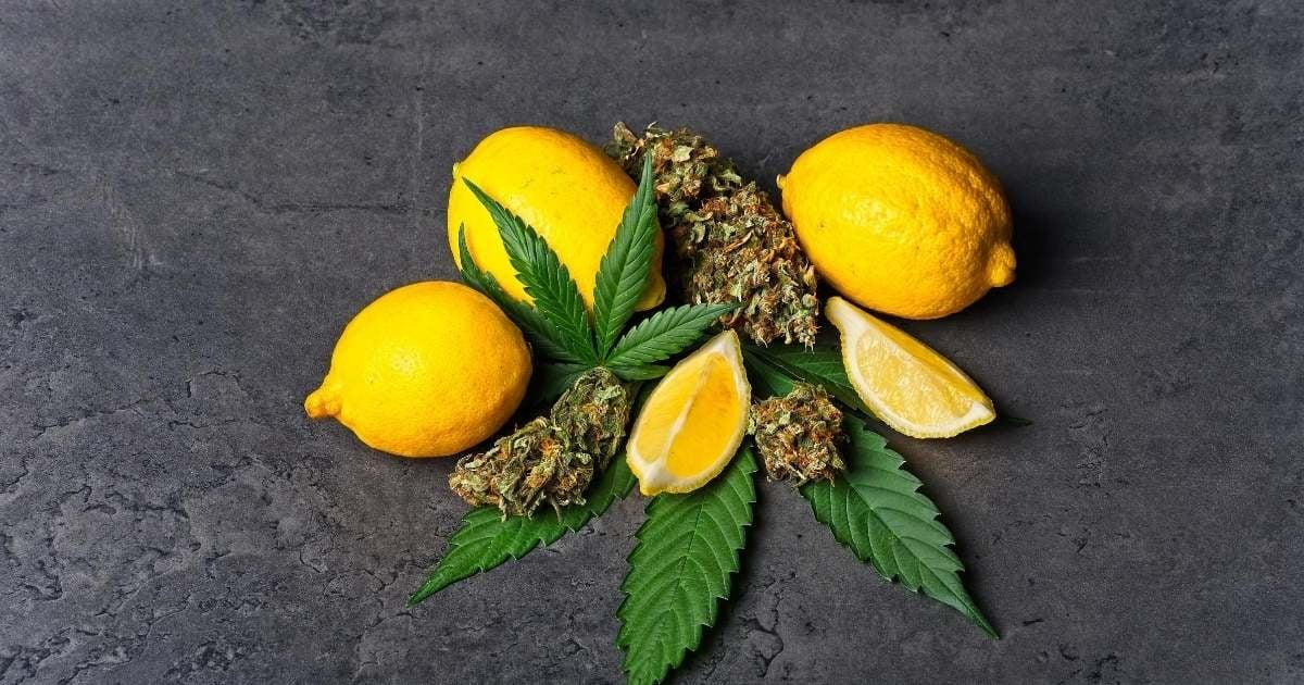 limonene-terpene